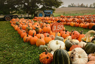 Photograph - The Pumpkin Farm One by Charles Owens