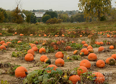 Photograph - The Pumpkin Farm Two by Charles Owens