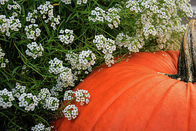 Photograph - The Pumpkin In The Alyssum by Joni Eskridge