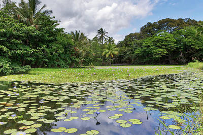 Photograph - The Punalu'u Lily Pond by Susan Rissi Tregoning