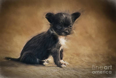 Photograph - The Puppy by Billie-Jo Miller