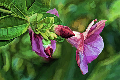 Photograph - The Purple Allamanda by HH Photography of Florida