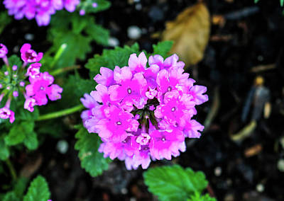 Photograph - The Purple Flower by Britten Adams