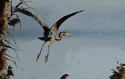 Photograph - The Purple Heron by Manjot Singh Sachdeva