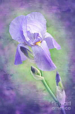 Stamen Mixed Media - The Purple Iris by Andee Design