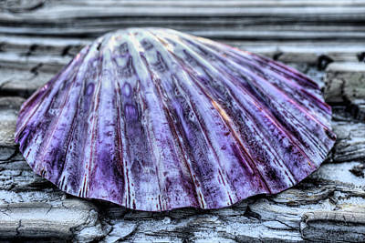 Photograph - The Purple Scallop by JC Findley