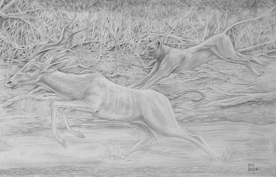 African Big Cats Drawing - The Pursuit by Duncan Sawyer