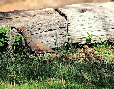 Photograph - The Quail Family by Matalyn Gardner