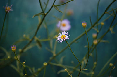 Art Print featuring the photograph The Quiet Aster by Douglas MooreZart