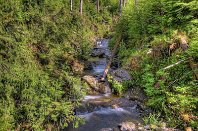 Photograph - The Quinault Stream 2 by Richard J Cassato