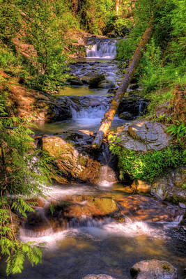 Photograph - The Quinault Stream by Richard J Cassato