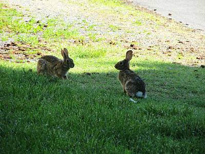 Photograph - The Rabbit Dance by Digital Art Cafe