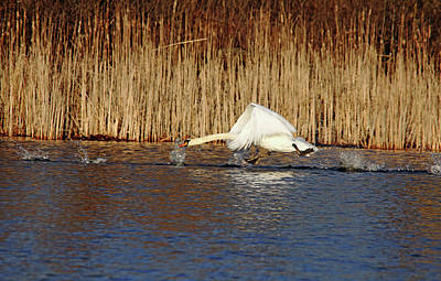 Photograph - The Race Is On by Debbie Oppermann