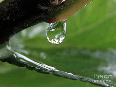 Photograph - The Raindrop by Kim Tran