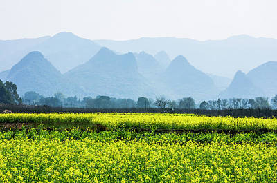 Photograph - The Rape Flowers Field Scenery by Carl Ning