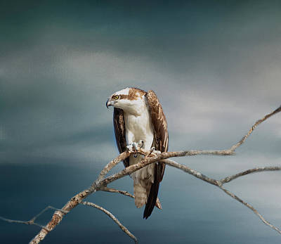 Photograph - The Raptor - Osprey by Kim Hojnacki