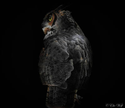 Photograph - The Raptors, No. 11 by Elie Wolf