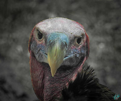 Photograph - The Raptors, No. 36 by Elie Wolf