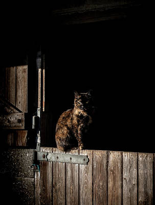 Cat Photograph - The Rat Catcher by Paul Neville