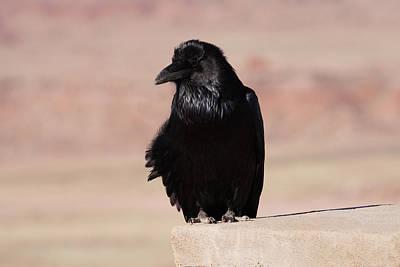 Photograph - The Raven 3 by Ernie Echols