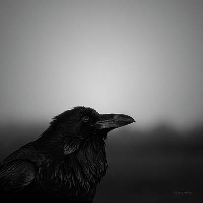 Photograph - The Raven Bw by David Gordon