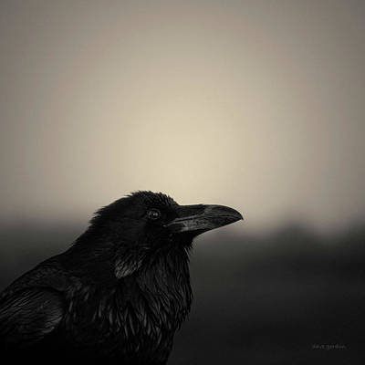 Montage Photograph - The Raven by Dave Gordon