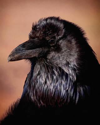 Digital Art - The Raven by Ernie Echols