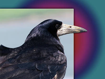 Photograph - The Raven by Jacqueline  DiAnne Wasson