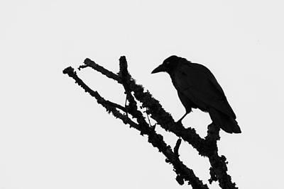 Photograph - The Raven by Ken Barrett