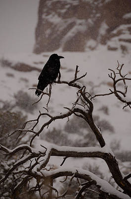 Photograph - The Raven by Tranquil Light  Photography
