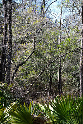 Photograph - The Real Florida Woods by rd Erickson