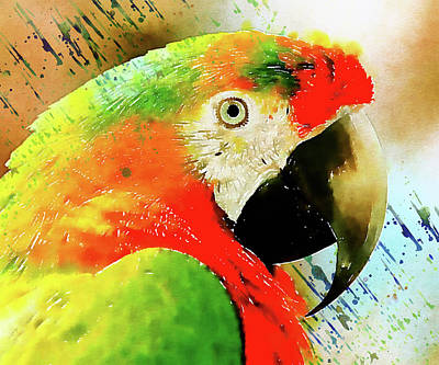 Macaw Mixed Media - The Real Macaw by Georgiana Romanovna