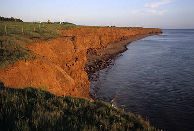 The Red Cliffs Of Prince Edward Island Print by Taylor S. Kennedy