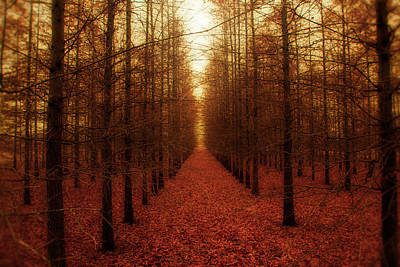 Outdoors Photograph - The Red Forest by Amy Tyler
