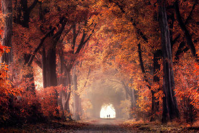 Photograph - The Red Forest by Edwin Mooijaart