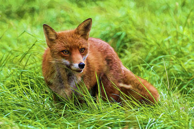 Fife Photograph - The Red Fox by Marcia Colelli