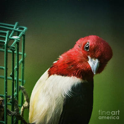 Photograph - The Red Head by Janice Rae Pariza
