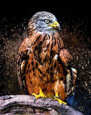 Buzzard Digital Art - The Red Kite  by Scott Wallace