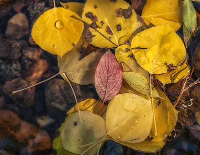 Photograph - The Red Leaf by Jonathan Nguyen
