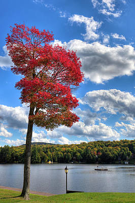 Autumn Foliage Photograph - The Red Tree At The Pond by David Patterson