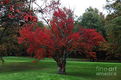 Photograph - The Red Tree by Jeff Breiman