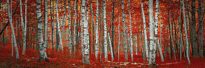 Photograph - The Red Trees by Emmanuel Panagiotakis
