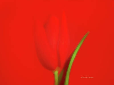 Digital Art - The Red Tulip Art Photograph by Miss Pet Sitter