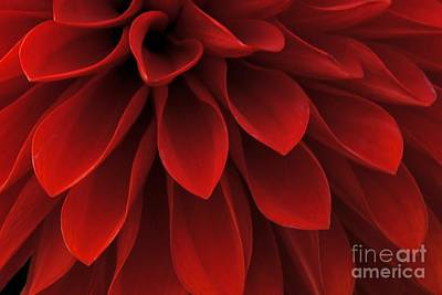 Photograph - The Reddest Red by Patricia Strand