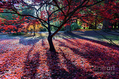 Photograph - The Reds Of Autumn by Colin Rayner
