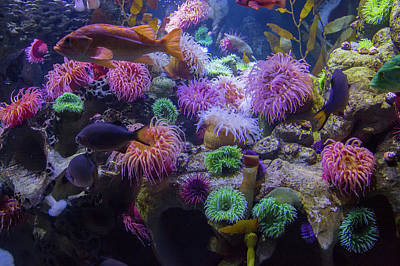 Animals Photos - The Reef by Betsy Knapp