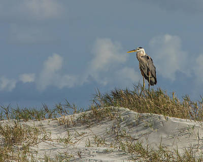Photograph - The Regal Great Blue Heron by Paula Porterfield-Izzo