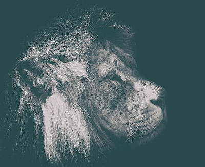 Leo Photograph - The Regal Look by Martin Newman