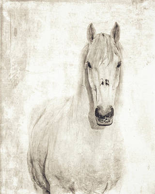 Photograph - The Rescue by Fast Horse Photography