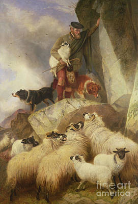 Herding Dog Painting - The Rescue by Richard Ansdell